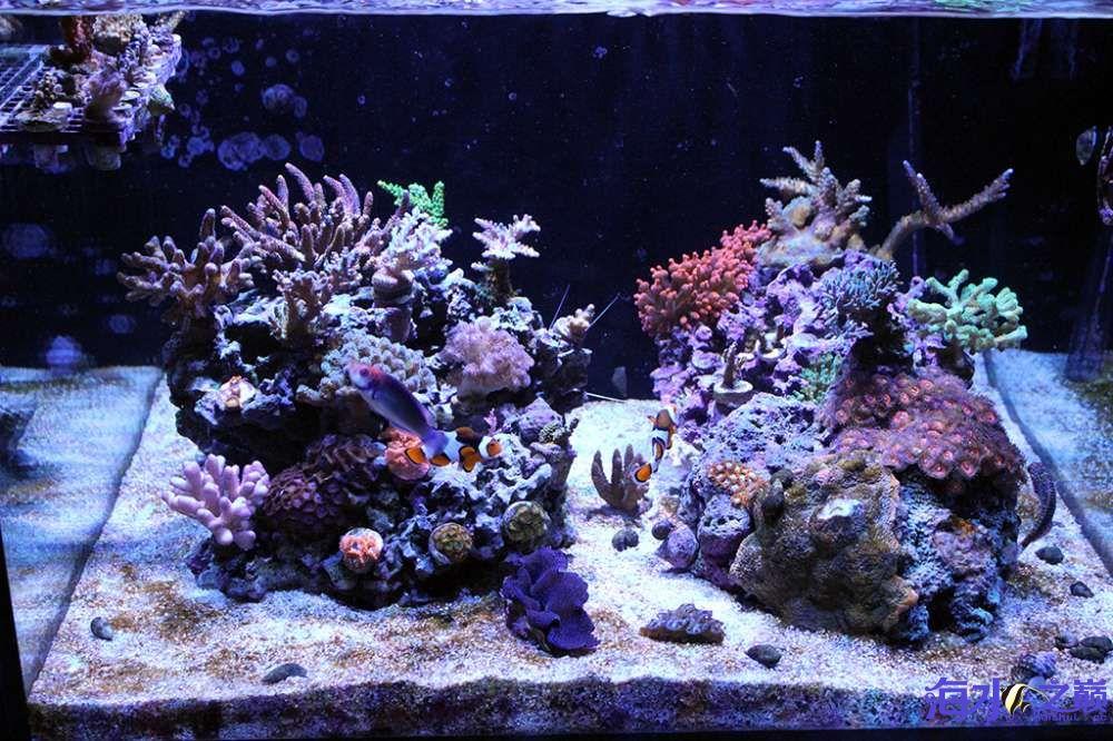 珊瑚长大有点乱 杭州龙鱼论坛 杭州龙鱼第2张