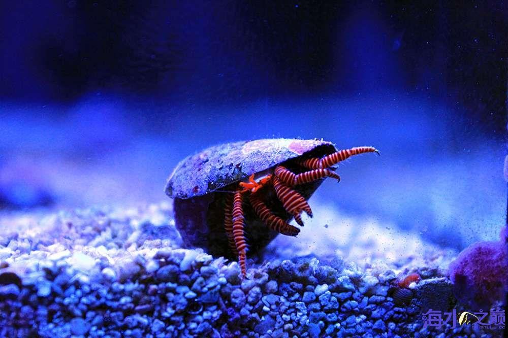 珊瑚长大有点乱 杭州龙鱼论坛 杭州龙鱼第4张