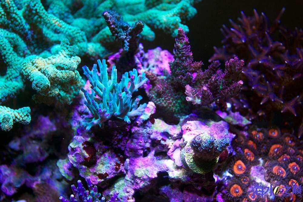 珊瑚长大有点乱 杭州龙鱼论坛 杭州龙鱼第5张