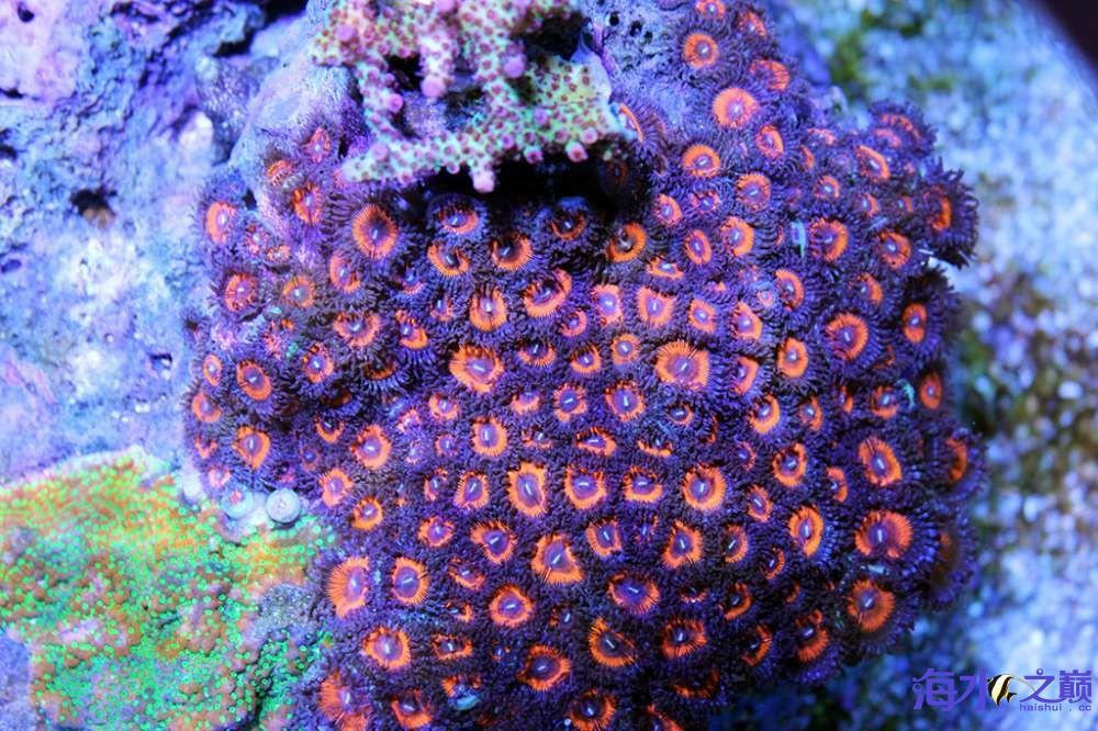 珊瑚长大有点乱 杭州龙鱼论坛 杭州龙鱼第10张