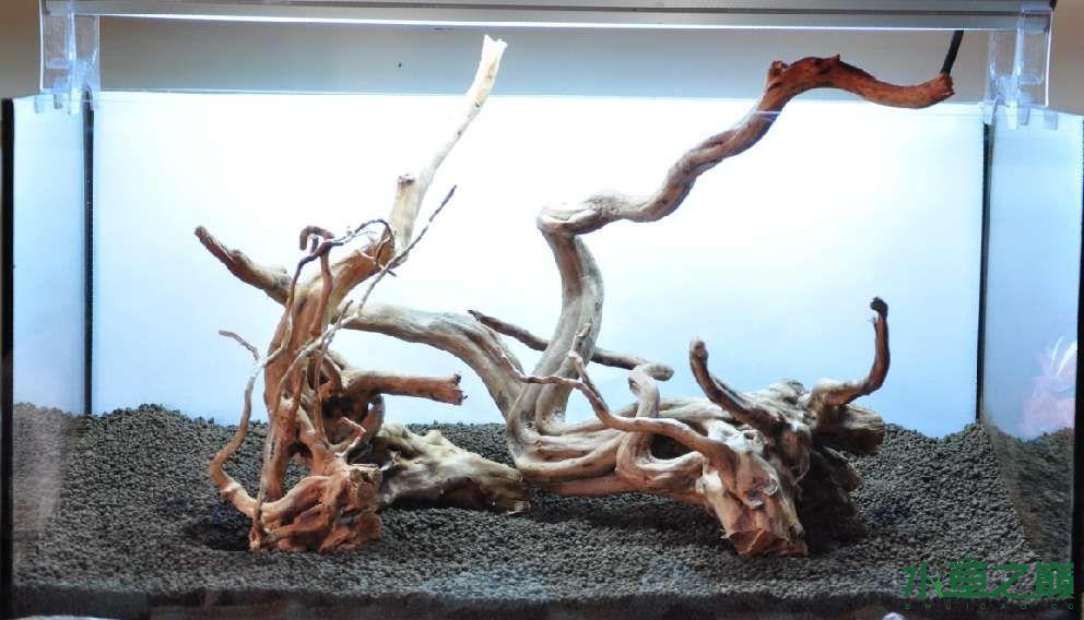 一个造景只需两块沉木 长沙龙鱼论坛 长沙龙鱼第1张