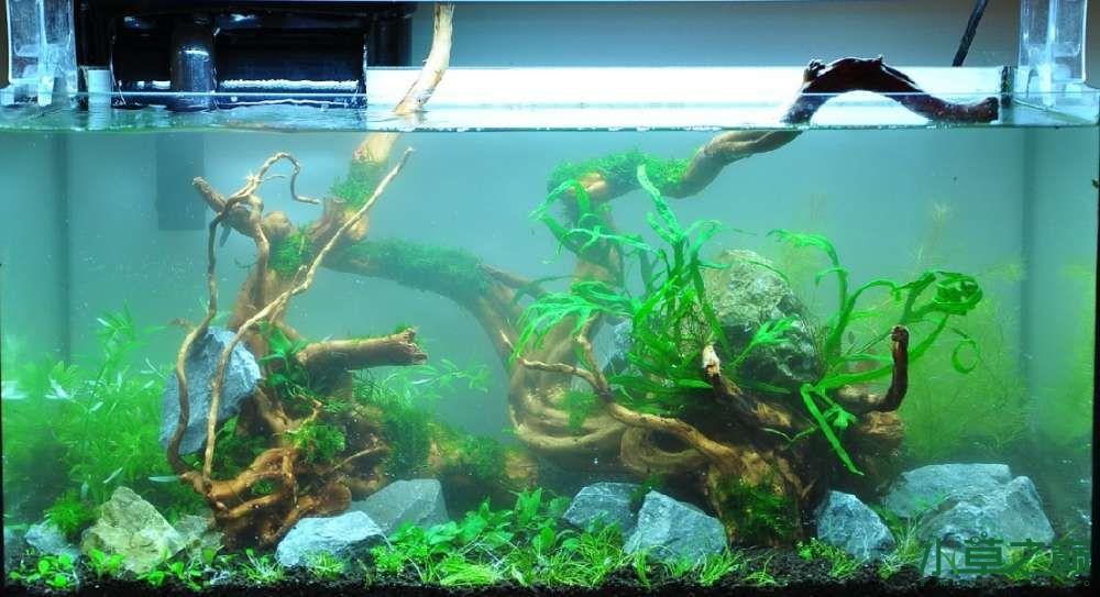 一个造景只需两块沉木 长沙龙鱼论坛 长沙龙鱼第5张