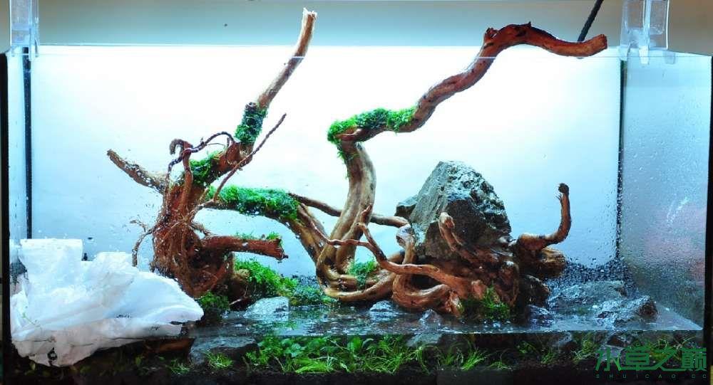一个造景只需两块沉木 长沙龙鱼论坛 长沙龙鱼第3张