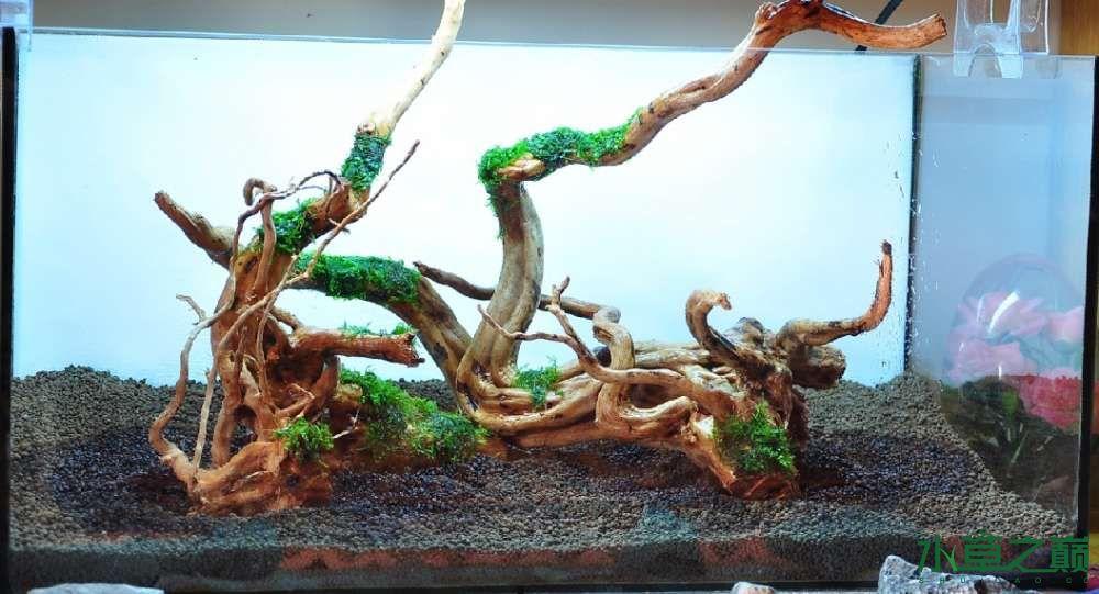 一个造景只需两块沉木 长沙龙鱼论坛 长沙龙鱼第2张