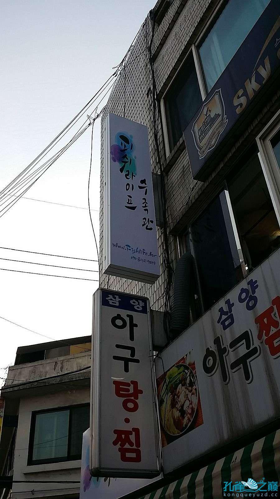 考察韩国首尔东巴比伦水族馆 沈阳水族批发市场 沈阳龙鱼第1张