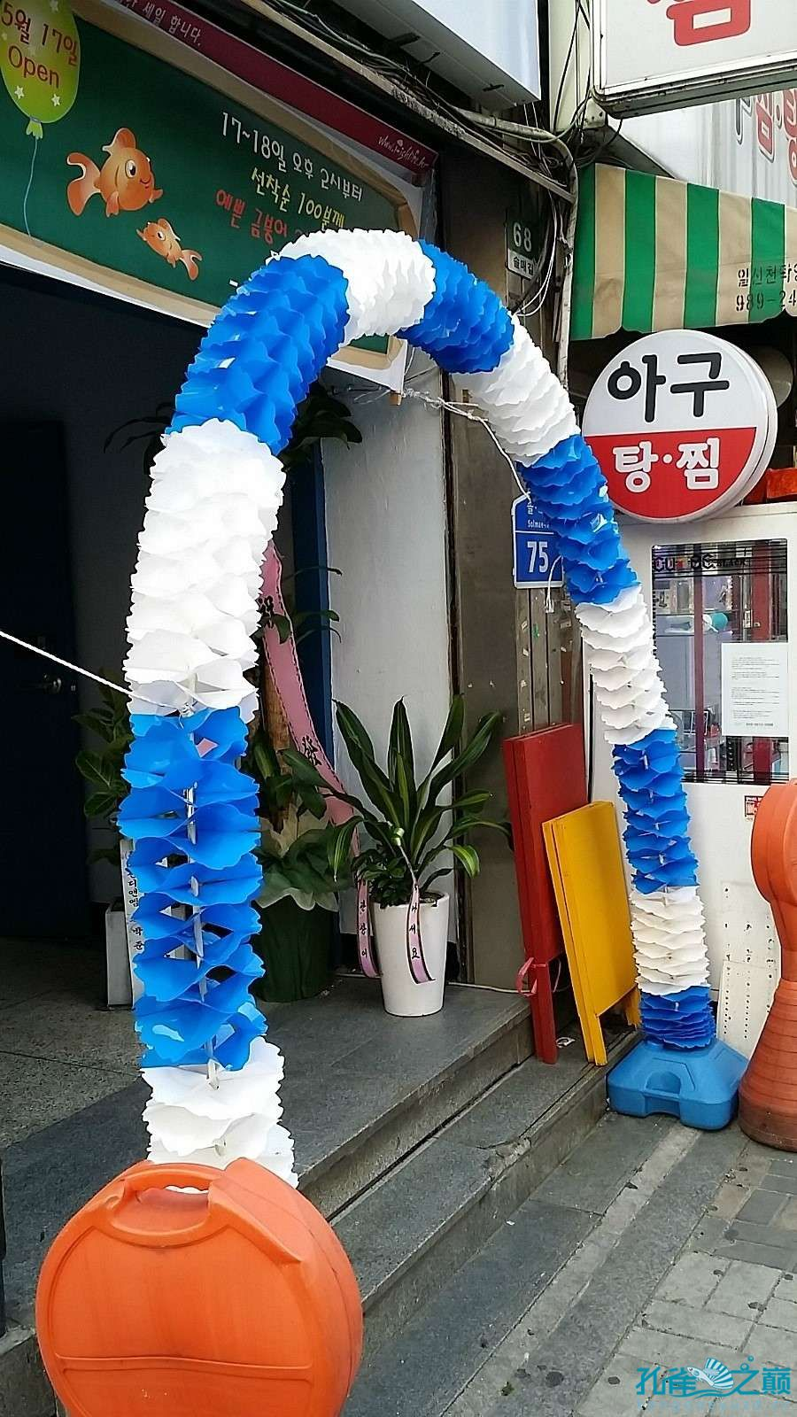 考察韩国首尔东巴比伦水族馆 沈阳水族批发市场 沈阳龙鱼第3张