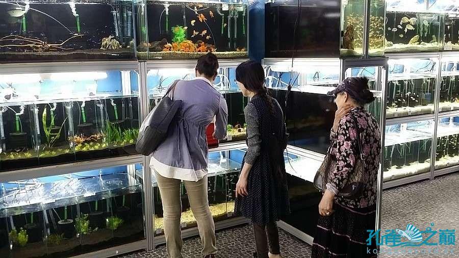 考察韩国首尔东巴比伦水族馆 沈阳水族批发市场 沈阳龙鱼第8张