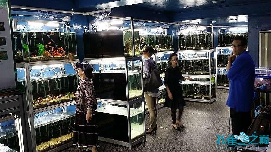 考察韩国首尔东巴比伦水族馆 沈阳水族批发市场 沈阳龙鱼第9张