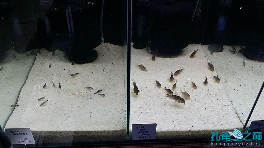 考察韩国首尔东巴比伦水族馆 沈阳水族批发市场 沈阳龙鱼第11张