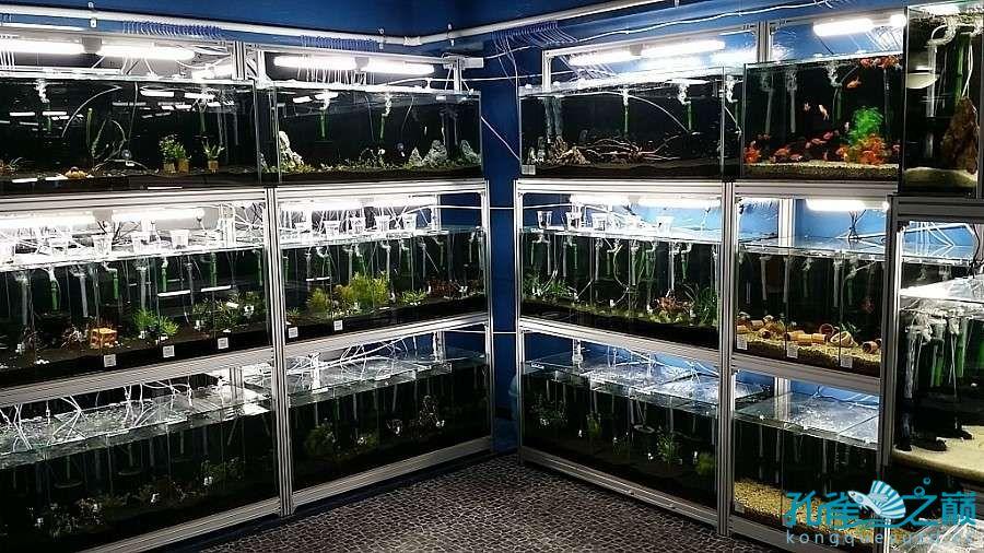 考察韩国首尔东巴比伦水族馆 沈阳水族批发市场 沈阳龙鱼第12张