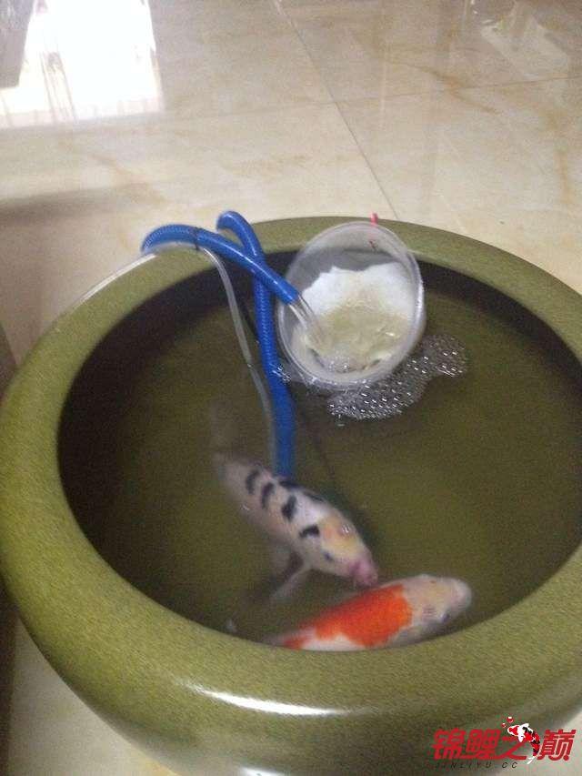 新手提问:鱼自己跳出缸了怎么防范?受伤怎么处理? 合肥龙鱼论坛 合肥龙鱼第2张