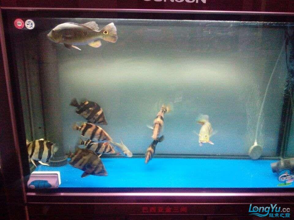 PH4.5鱼缸子虎状态
