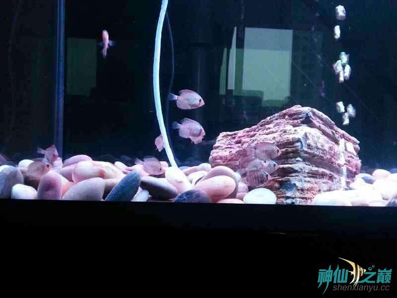 请高手们帮忙分析下鱼儿得的什么病 合肥龙鱼论坛 合肥龙鱼第5张