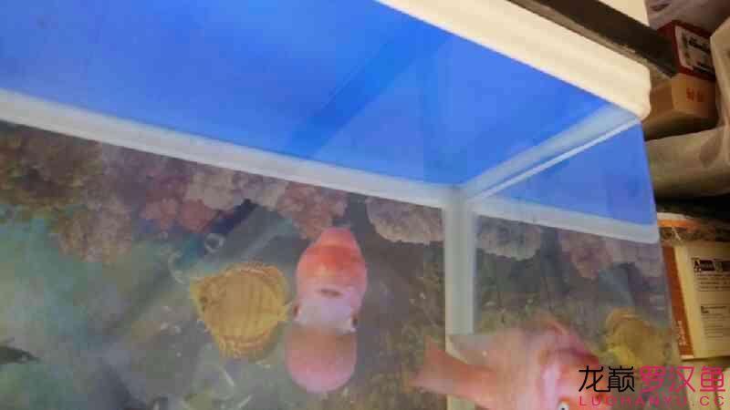 刚来的 哈尔滨水族批发市场 哈尔滨龙鱼第3张