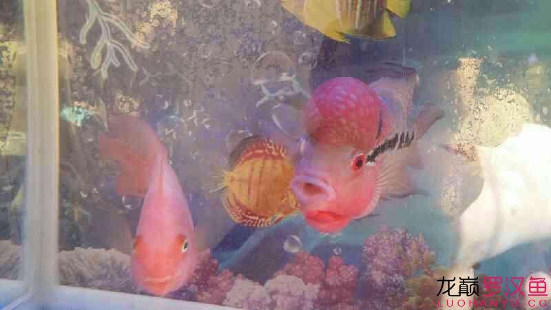 刚来的 哈尔滨水族批发市场 哈尔滨龙鱼第6张