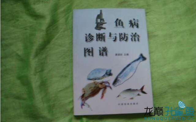 科学家对孔雀鱼杀蚊警告:这东西侵略性太强 观赏鱼常见疾病 拉萨水族馆第2张