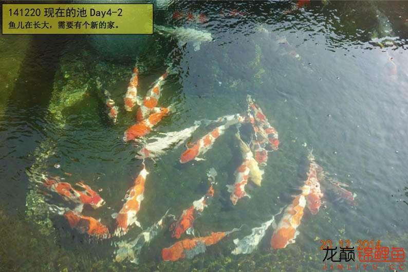 141220 现在的池Day4-2.jpg