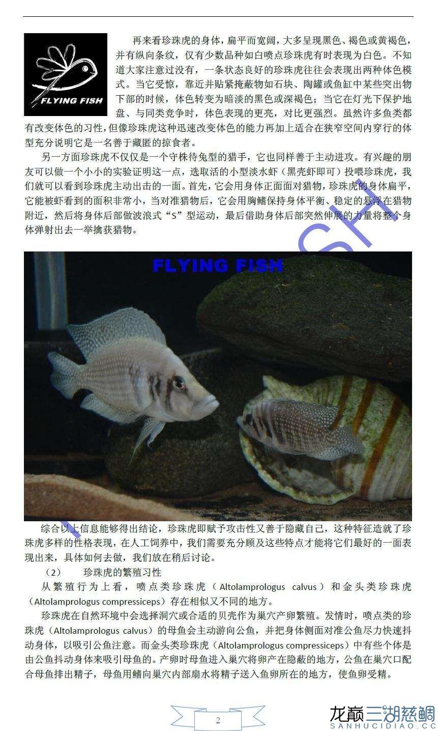 珍珠虎繁殖饲养攻略2.JPG