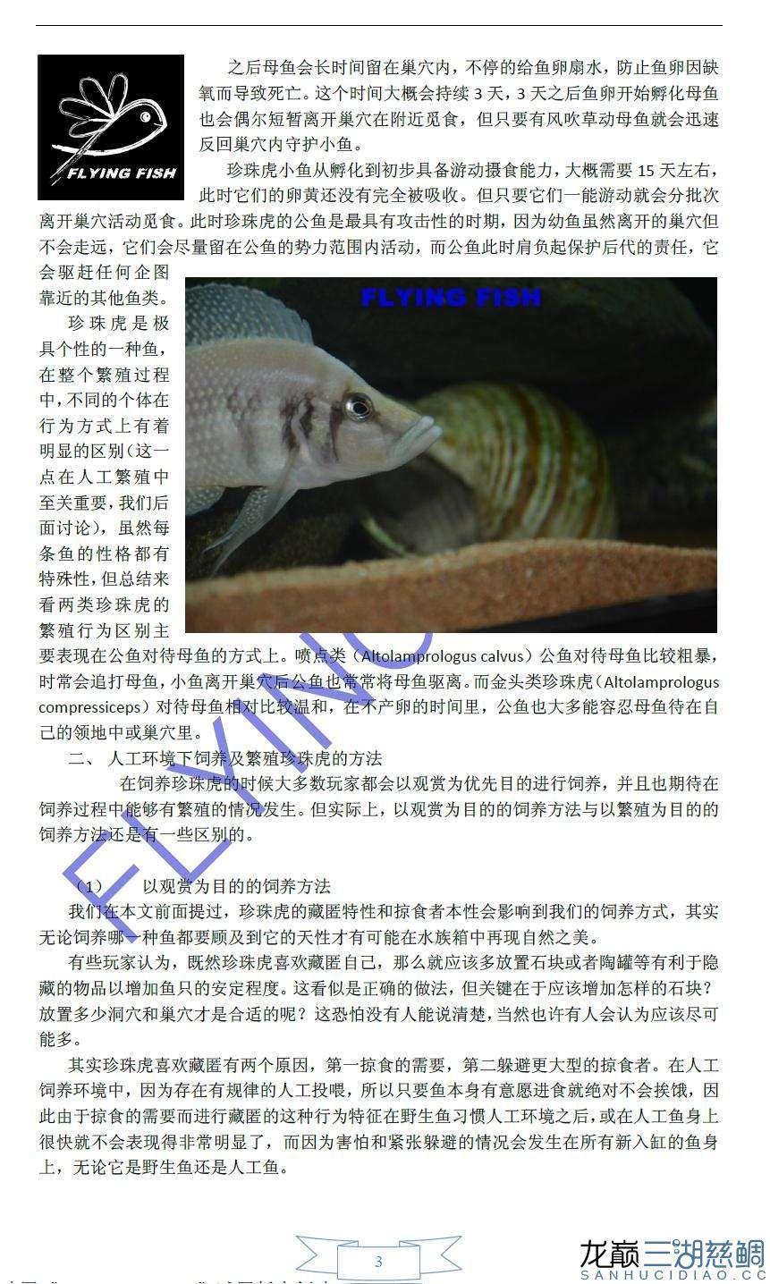 珍珠虎繁殖饲养攻略3.JPG
