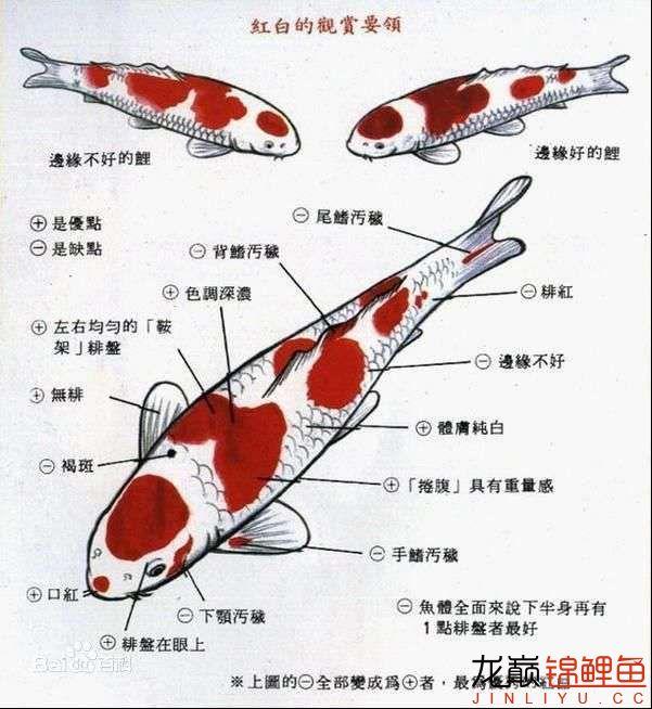 红白图鉴.jpg
