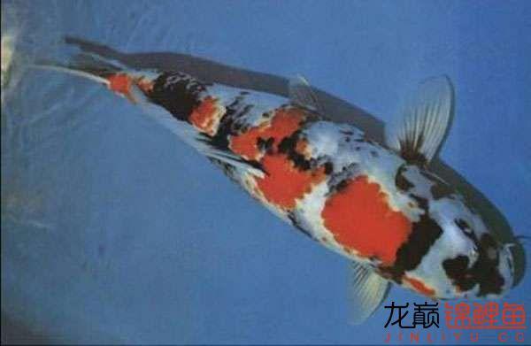 近代昭和.jpg