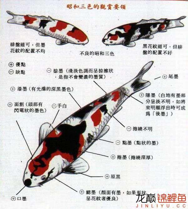 昭和三色鉴赏图.jpg