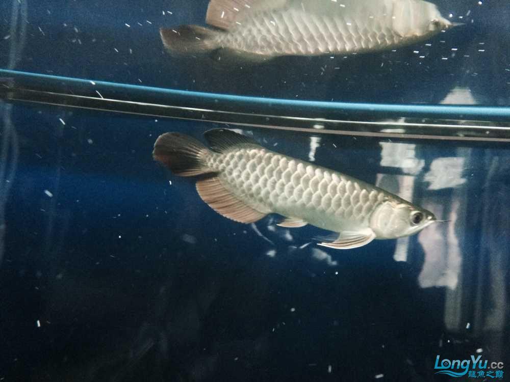 【渭南布隆迪六间鱼】美不胜收