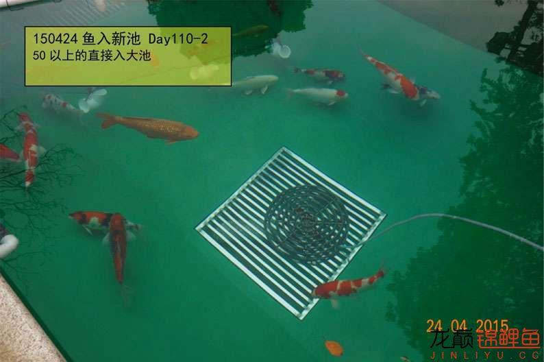 150424 转鱼入新池 110-2.jpg