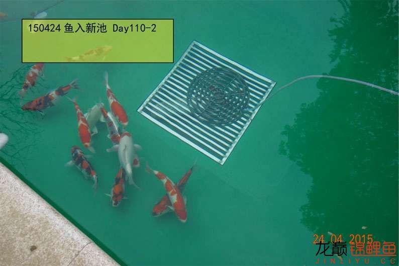 150424 转鱼入新池 110-3.jpg