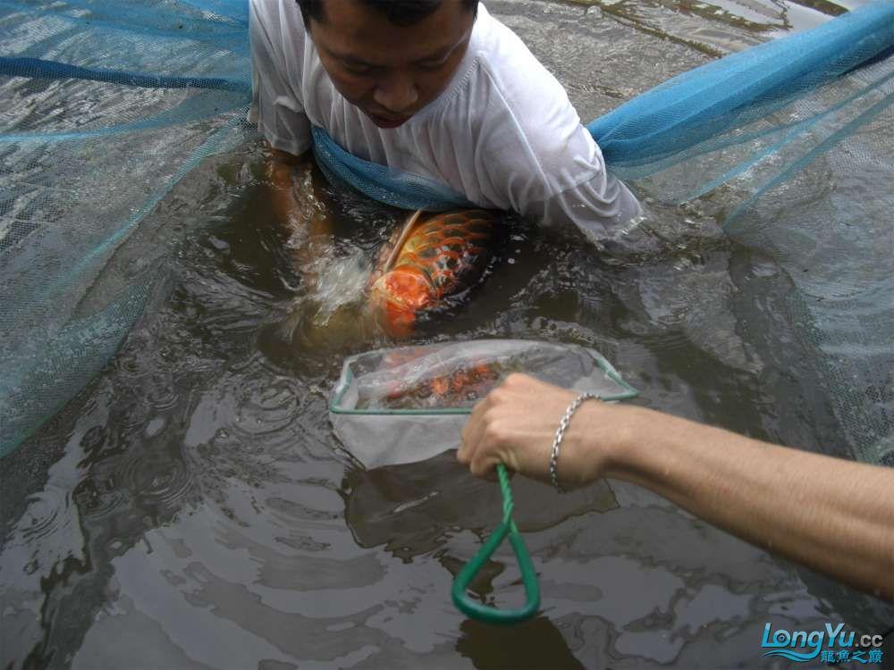 印尼扒蛋2.JPG