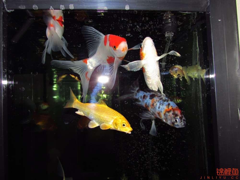 这是我家的鱼儿,说实话我也是锦鲤毒友