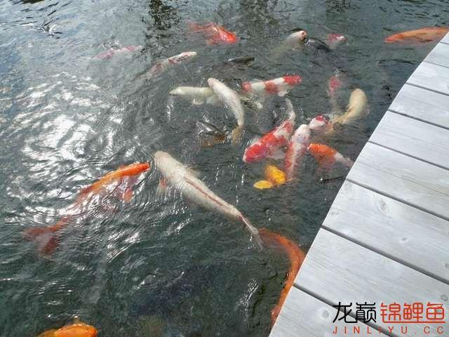 鱼欢1.JPG