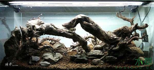绝美的沉木缸造景令人打开眼界 西安龙鱼论坛 西安博特第2张