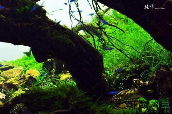 绝美的沉木缸造景令人打开眼界 西安龙鱼论坛 西安博特第8张