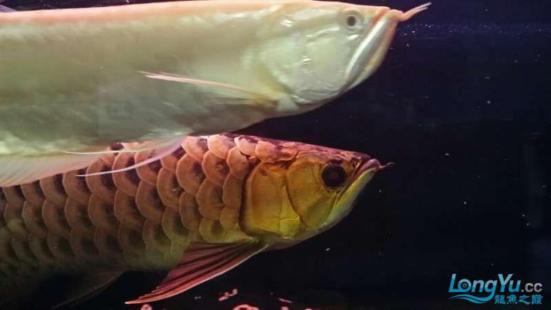 【合肥鱼缸造景水草沉木】混养也有难得的和谐 合肥观赏鱼 合肥龙鱼第1张