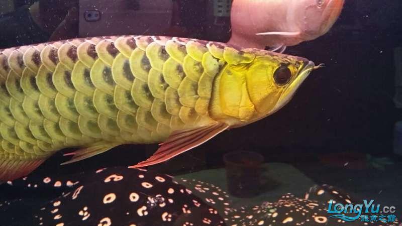 【合肥鱼缸造景水草沉木】混养也有难得的和谐 合肥观赏鱼 合肥龙鱼第2张
