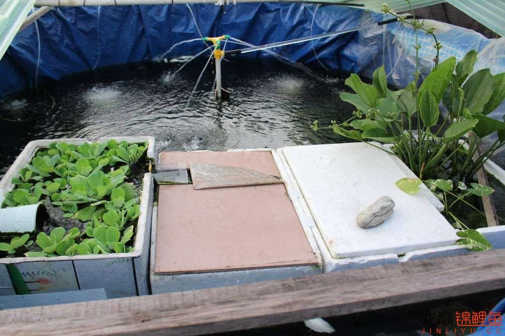 简易鱼池看来养锦鲤也不难 烟台龙鱼论坛 烟台龙鱼第6张