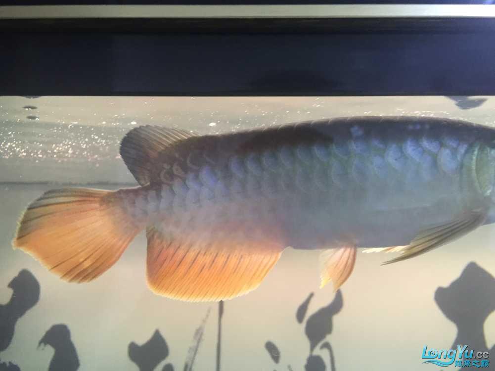 求解答过背还是高背还是B过【北京水草缸适合养什么鱼】