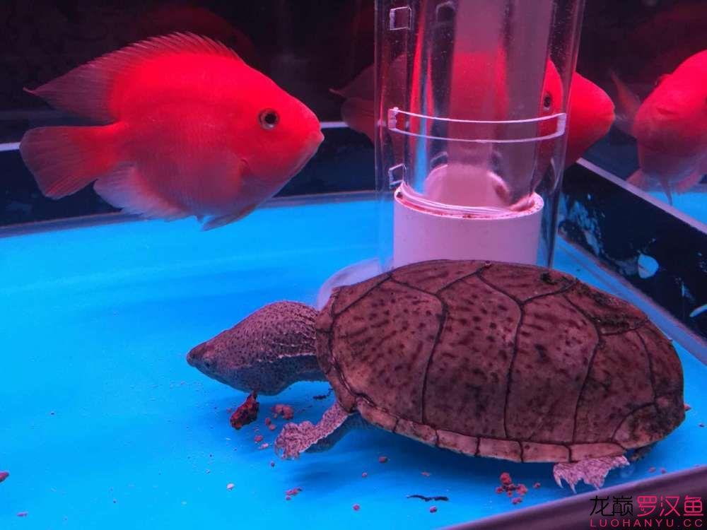 大家看这个龟值多少钱?