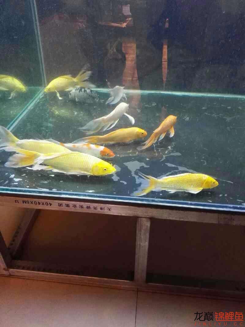 西安亚克力鱼缸为什么我的锦鲤老是趴在缸底【西安最贵最好龙鱼】不动啊?