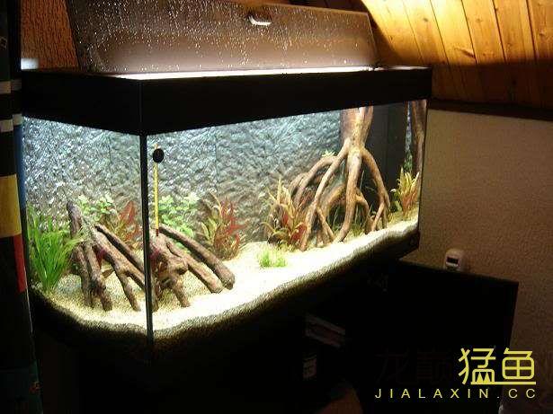 【深圳斑马鱼】哪种水虎缸造景好看? 深圳观赏鱼 深圳龙鱼第2张