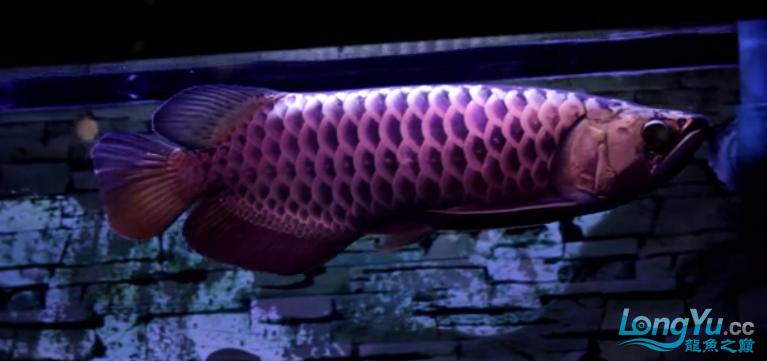 换个灯光试试 渭南水族批发市场 渭南龙鱼第1张