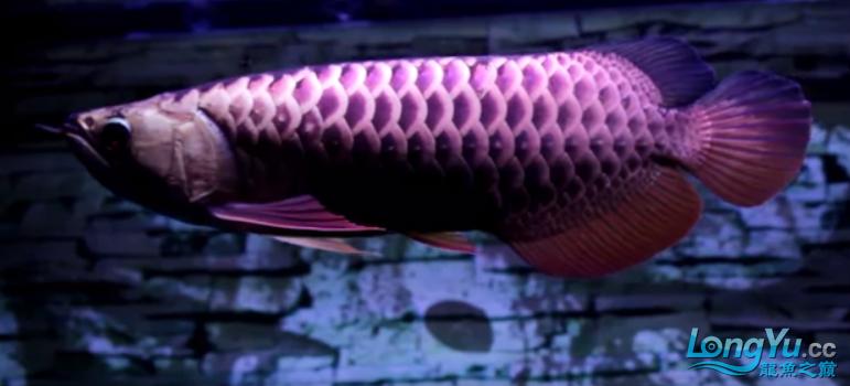 换个灯光试试 渭南水族批发市场 渭南龙鱼第3张