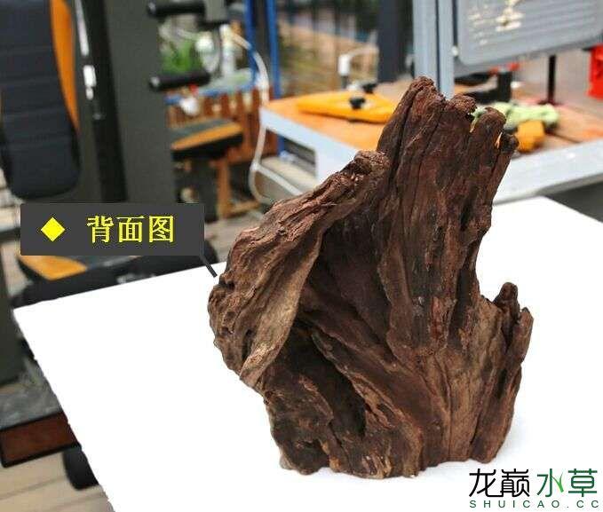 沉木制作辣椒和虾共同的家园 贵阳龙鱼论坛 贵阳龙鱼第2张