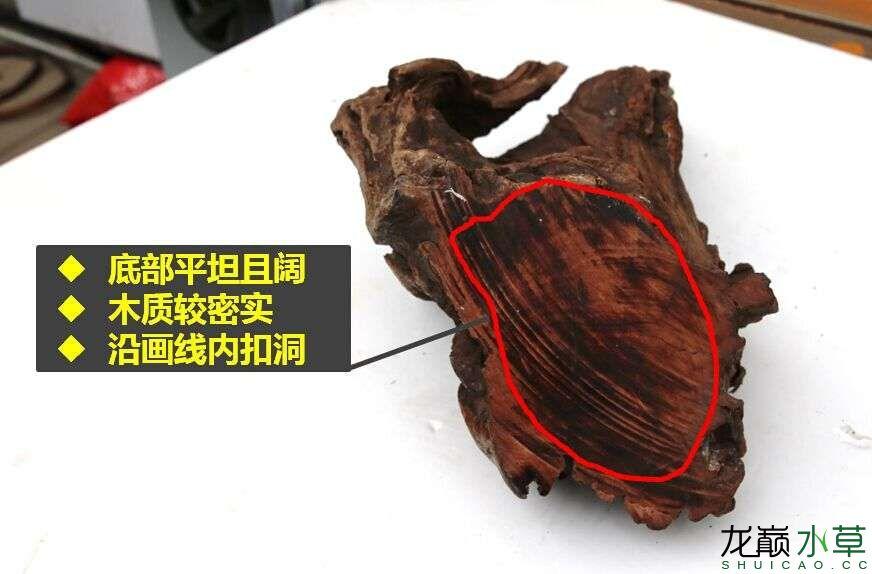 沉木制作辣椒和虾共同的家园 贵阳龙鱼论坛 贵阳龙鱼第3张