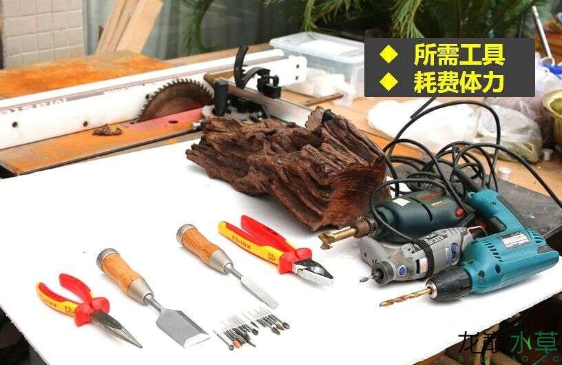 沉木制作辣椒和虾共同的家园 贵阳龙鱼论坛 贵阳龙鱼第4张