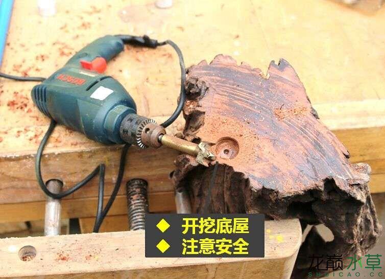 沉木制作辣椒和虾共同的家园 贵阳龙鱼论坛 贵阳龙鱼第5张