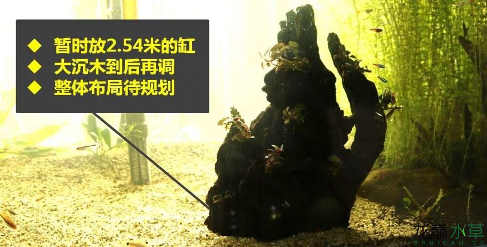 沉木制作辣椒和虾共同的家园 贵阳龙鱼论坛 贵阳龙鱼第13张