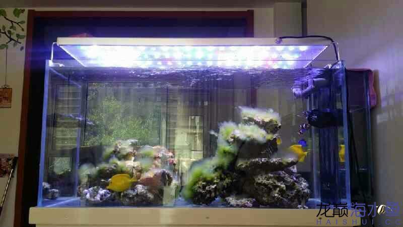 【北京哪个水族店卖女王大帆】藻缸灯的作用