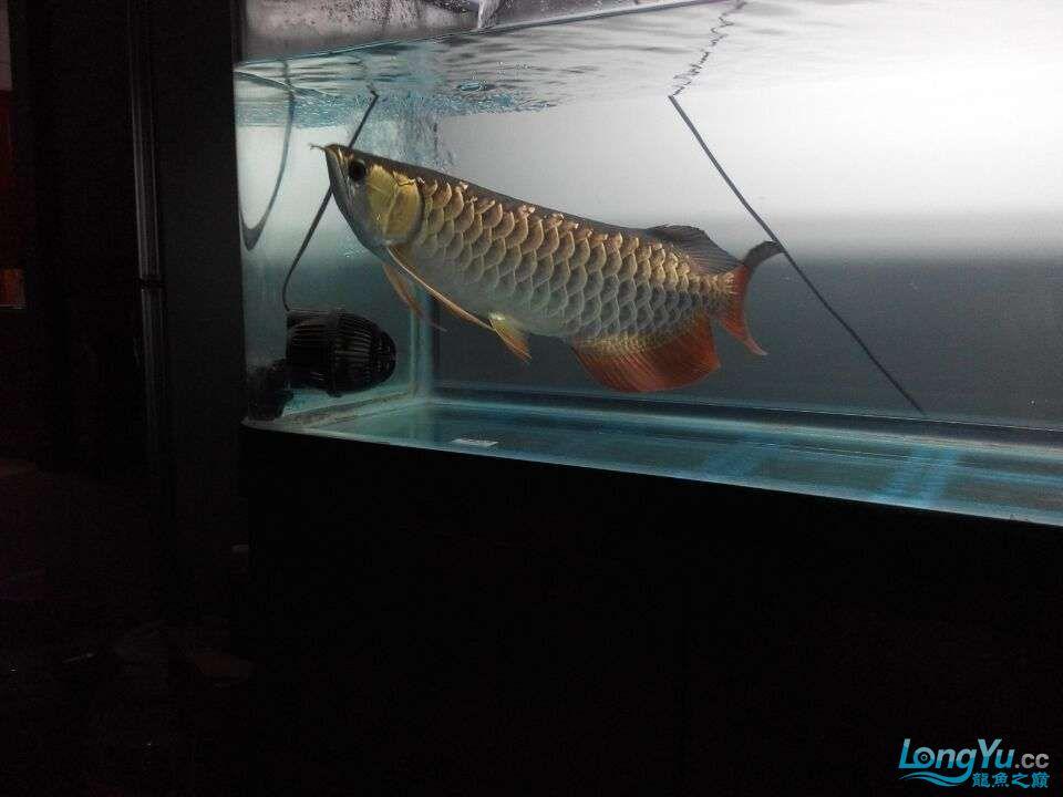 2年中的各种状态 哈尔滨龙鱼论坛 哈尔滨龙鱼第1张